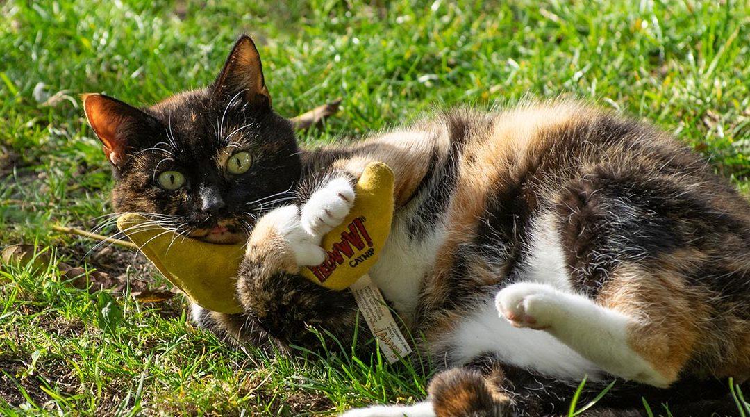 12 speeltips voor je kat