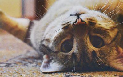 Je oudere kat