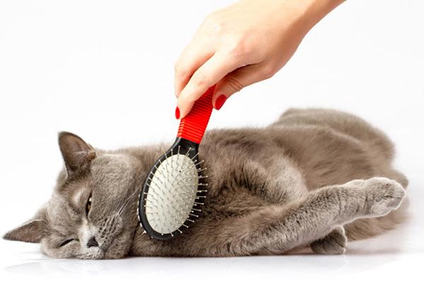 Vachtverzorging katten