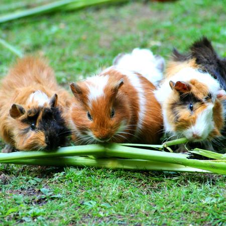 Waar koop ik knaagdierenvoer konijnenvoer