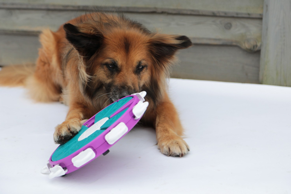 intelligentiespel hondenspeelgoed